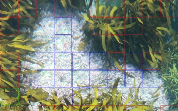 海底の写真をAIで解析し、海藻の繁殖状況を把握する