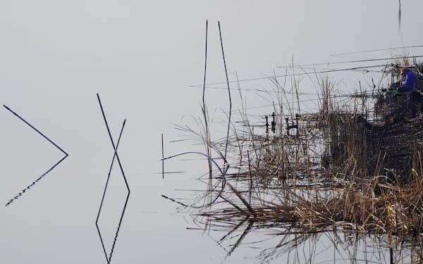 牛久沼に注ぐ稲荷川。ヨシが広がる水辺で釣り人が糸を垂れる