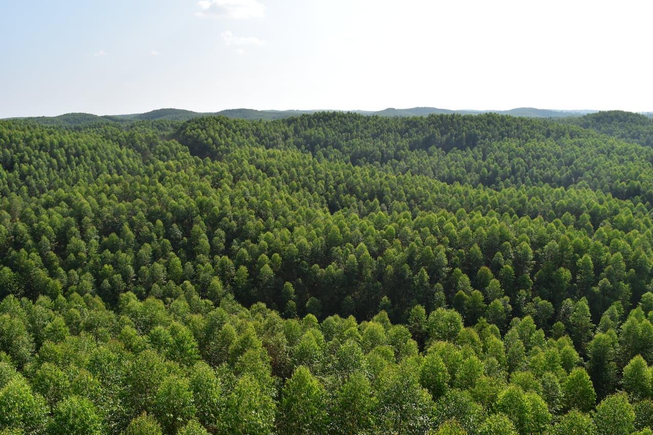 森林保全の拡大をすすめる(インドネシアの森林全景)