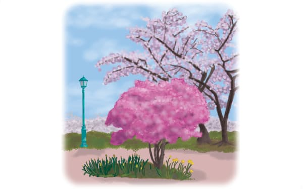 サムネイル)話題3月22日から27日(ツツジと桜)