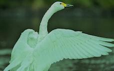 緑の白鳥に備える中央銀行 気温上昇抑制を考慮