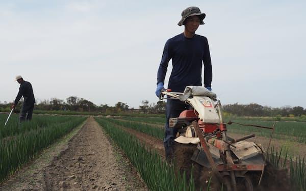白ネギ生産では、白い部分を作るための「土寄せ」作業などに機械を利用(大分県豊後高田市)
