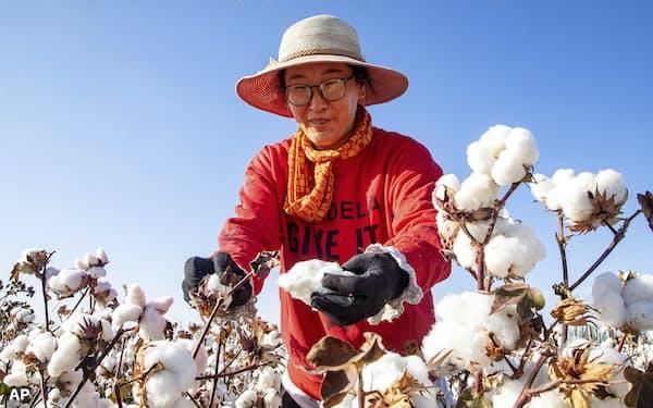 人権問題で焦点の中国・新疆ウイグル自治区は、綿糸の一大産地として知られる。                                                         写真は北西部の哈密(ハミ)市の綿花畑(2020年10月=AP)