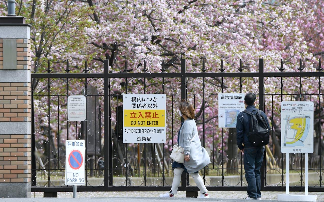 「桜の通り抜け」の中止が決まった造幣局では、柵越しにサクラを見る人の姿が見られた(5日午前、大阪市北区)=目良友樹撮影