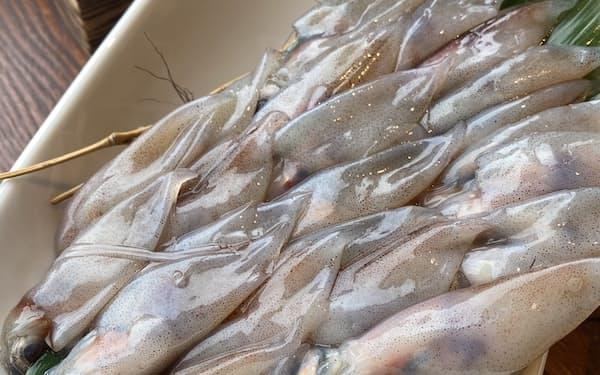 ホタルイカ漁は好調なスタート、卸値も2~3割安