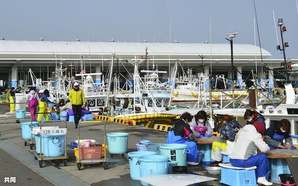 試験操業で水揚げされた魚を仕分ける漁業関係者ら=15日、福島県相馬市
