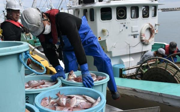 処理水放出による漁業への影響が懸念される(福島県相馬市の松川浦漁港)