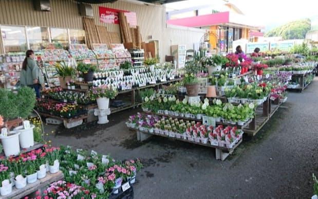 イオン九州は園芸品が好調で、新しい園芸専門店の開業を計画する