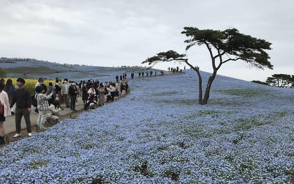 国営ひたち海浜公園はみはらしの丘を一方通行にするなどの感染対策をとっている(茨城県ひたちなか市、17日)