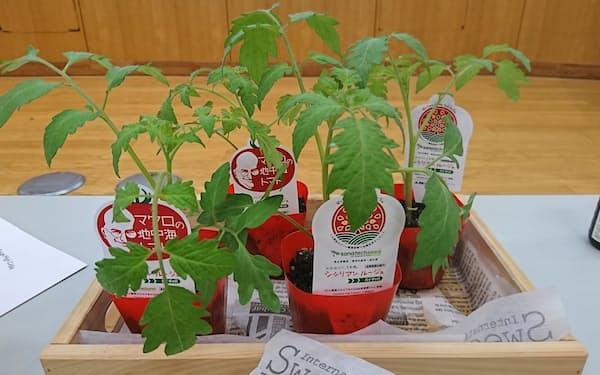 まずはトマトの苗を家庭菜園向けに無償で配布