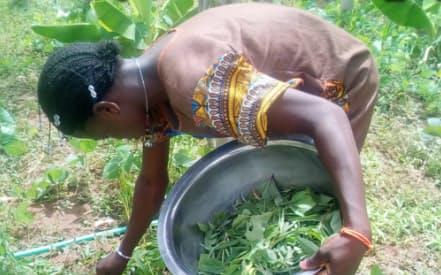 ソニーの新会社は協生農法を推進する(アフリカで行った実証実験)