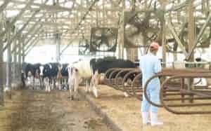 人間には快適な気候でも、牛など家畜には不快でストレスを抱えることがある