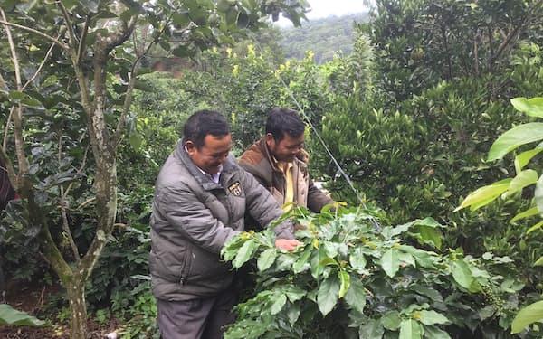 キリンHDはベトナムでコーヒー豆の持続可能性認証の取得を支援する