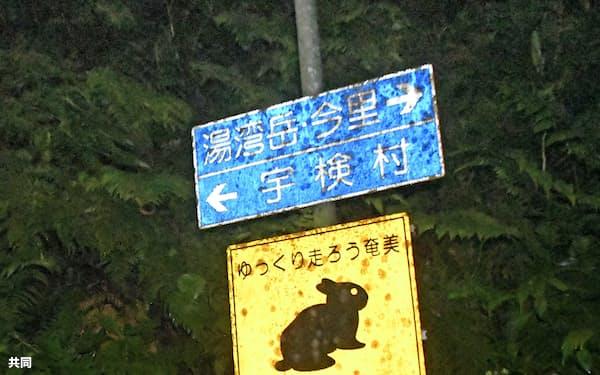 鹿児島県大和村の村道で、アマミノクロウサギへの注意を呼び掛ける看板(10日)=共同
