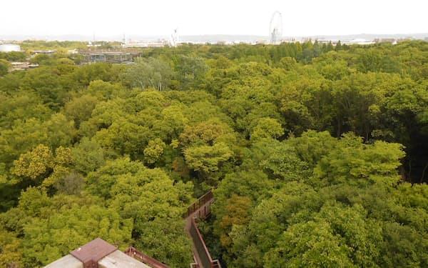 ソラードの展望台から万博公園の森を眺める(大阪府吹田市)
