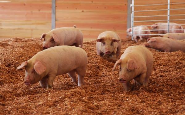 ポークランドグループのブランド豚「桃豚」(小坂町)