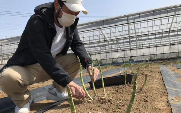 埼玉県三郷市の石井さんは短期で収穫できる栽培方法を採用する