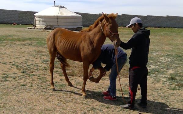 動物向けの抗炎症薬の研究を進める