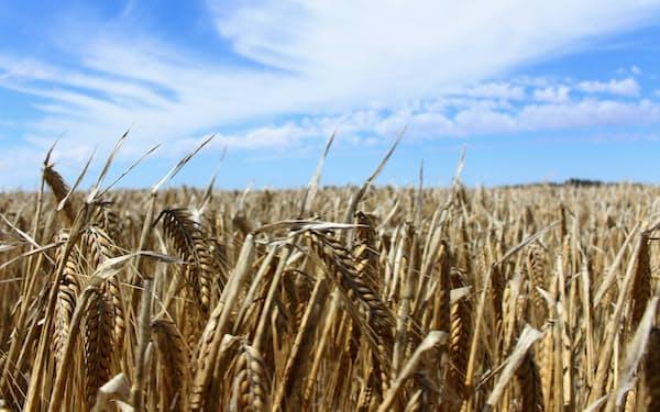 豪州産大麦は新たな輸出先を開拓し、大麦農家にとっては引き続き良い1年になった=ロイター