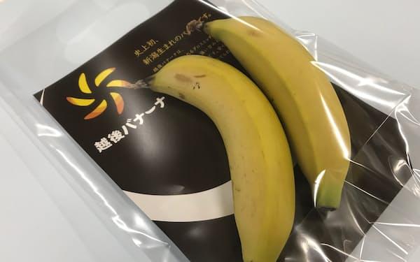 シモダ産業が手掛ける雪国育ちのバナナ「越後バナーナ」