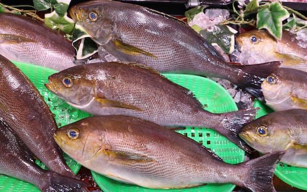 イサキの旬は初夏から秋口にかけて(魚喜