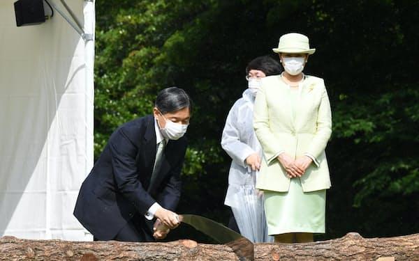 第71回全国植樹祭で、クロマツにのこぎりを入れる天皇陛下(30日、東京都港区の赤坂御用地)