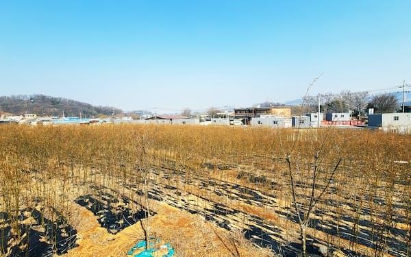 土地住宅公社の職員らが開発地区の土地を公表前に買い入れていた(ソウル近郊の開発予定地区)