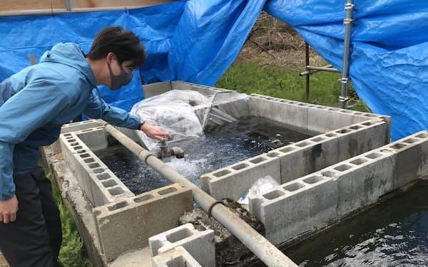 井口氏は所有する温泉でスッポン養殖を始める