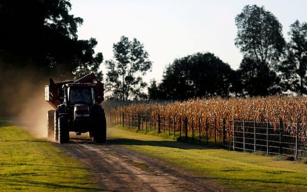 アルゼンチンのトウモロコシ農場(2020年4月、ブエノスアイレス郊外)=ロイター