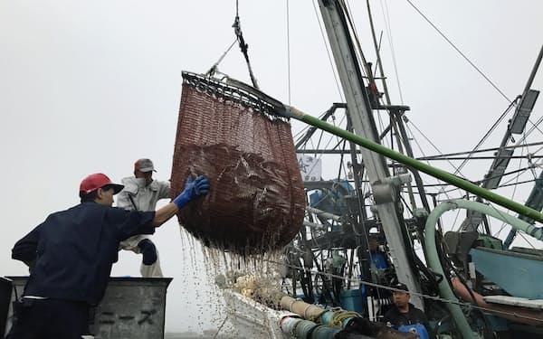 サンマなど複数の魚種が歴史的な不漁に見舞われている