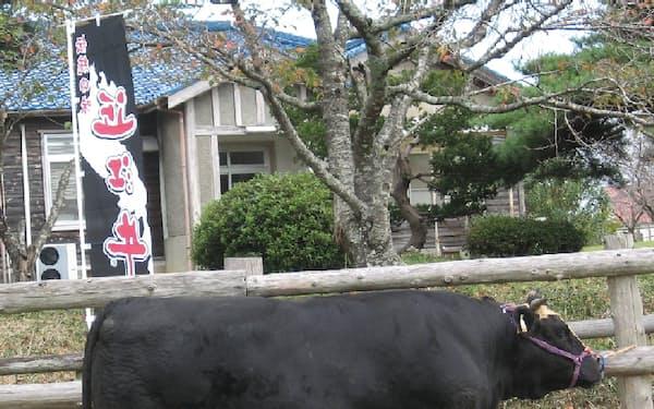 審査会に出品された近江牛(2017年10月、滋賀県日野町)=滋賀県提供