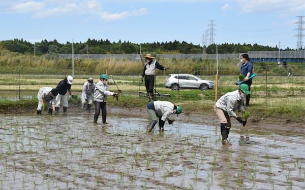 2022年春の避難指示解除を見込む地域で田植えが行われた(5月10日、福島県大熊町)