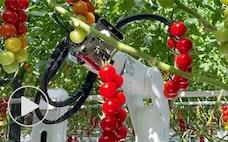デンソー、農業をカイゼン データ×ロボでトマト量産