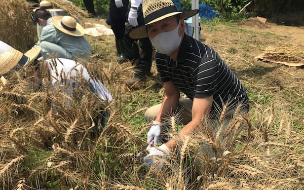 小麦を刈り取る白井利幸専務