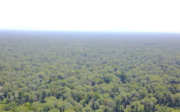 住友林業が管理するインドネシア・カリマンタン島(ボルネオ島)の泥炭地