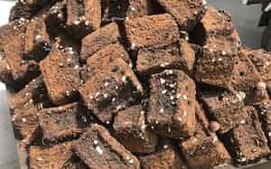 ピルツはシイタケを収穫した後の菌床を昆虫の餌に活用する(横手市)