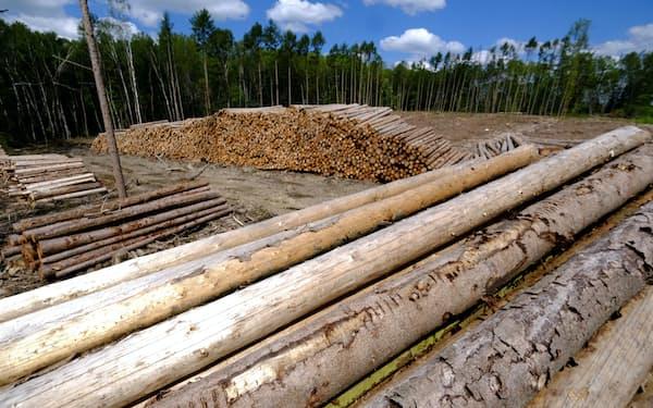 木材価格の高騰は世界的に広がっている(ドイツ中西部)=ロイター