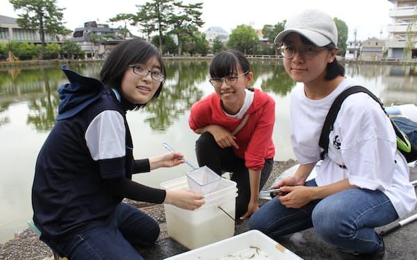 猿沢池で採集した魚を確認する学生ら(奈良市)