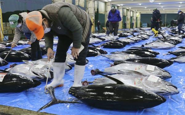今年もマグロ漁獲量の増枠提案に踏み切った=共同