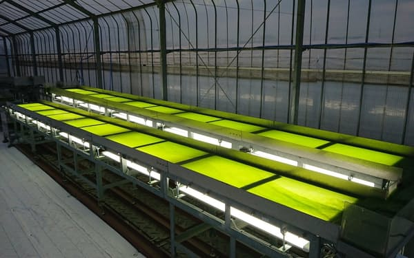 アルガルバイオは25年以降に多様な藻類を培養できる生産体制の構築を目指す=同社提供