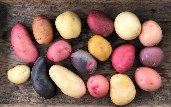 田口明香さんが栽培した色とりどりのジャガイモ