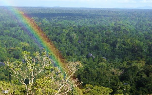 森林専門の投資会社などを買収する運用会社が相次ぐ=共同