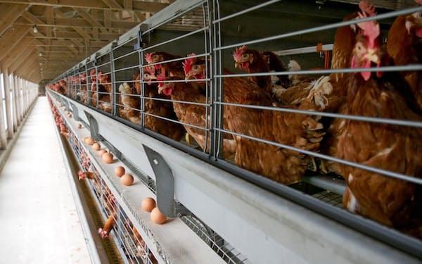 鶏卵は長く「物価の優等生」といわれてきた