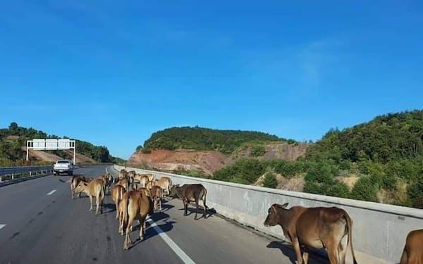 ビエンチャンとバンビエンを結ぶ「ラオス初」の高速道路(ビエンチャン郊外)