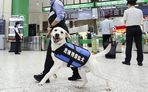JR東日本が昨年8月に実施した、爆発物などを探知する犬の運用試験=JR上野駅