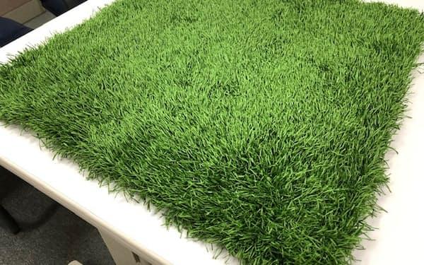王子ファイバーは屋外スポーツでも活用できる人工芝を開発している