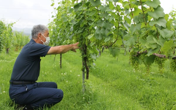 長野県ワイン協会の菊池敬理事長は長野ワインの国際競争力向上に取り組む(長野県塩尻市)