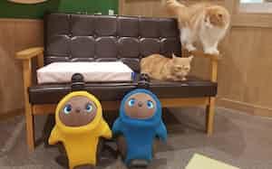 ペットショップ「ペットプラス川崎ルフロン店」では、犬や猫、LOVOTと一緒に暮らす条件や費用など比較しながら相談に応じてくれる