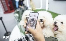 広がる中国のペット関連ビジネス 「電子身分証」も