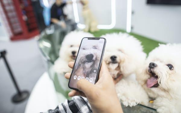 アント・グループは犬や猫の鼻紋をAIで識別するサービスを始めた=AP